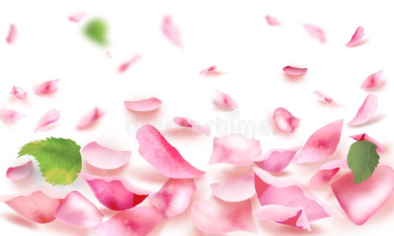 Rose and petals falling romance blank page watercolor background royalty free illustration