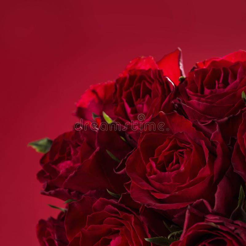 Download Roses on a red stock photo. Image of vase, saint, background - 109096234