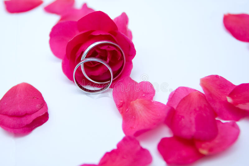 Download Roses and rings stock photo. Image of creativity, celebration - 12850536