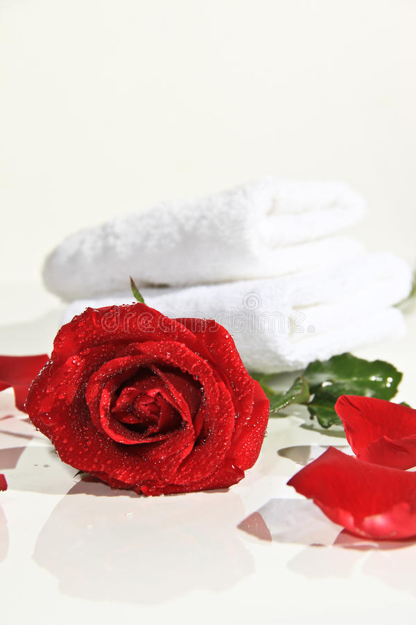 Download Roses of Romance stock image. Image of square, platinum - 28382877