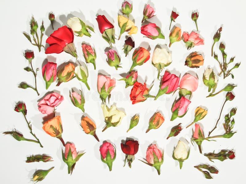 Roses of Romance