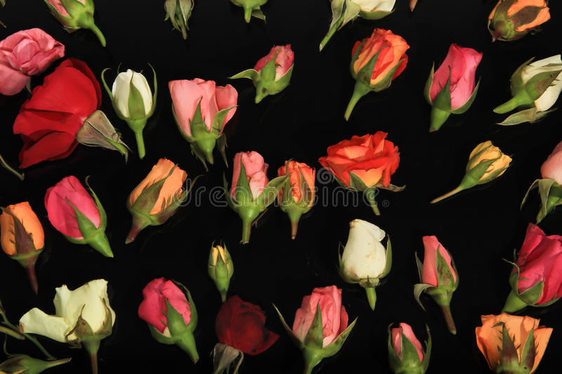 Download Roses of Romance stock photo. Image of background, nobody - 28383194