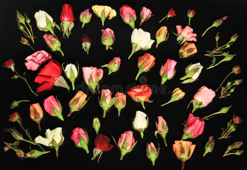 Download Roses of Romance stock image. Image of romance, square - 28383221