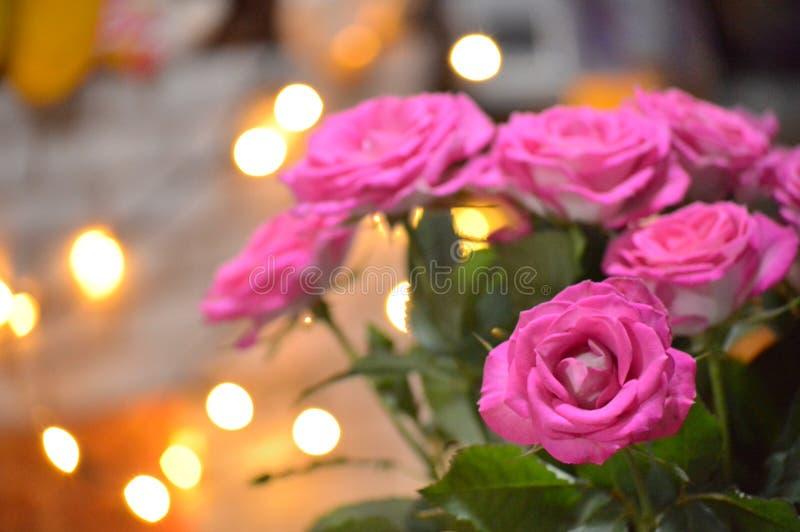 Roses roses aux lumières jaunes photo stock