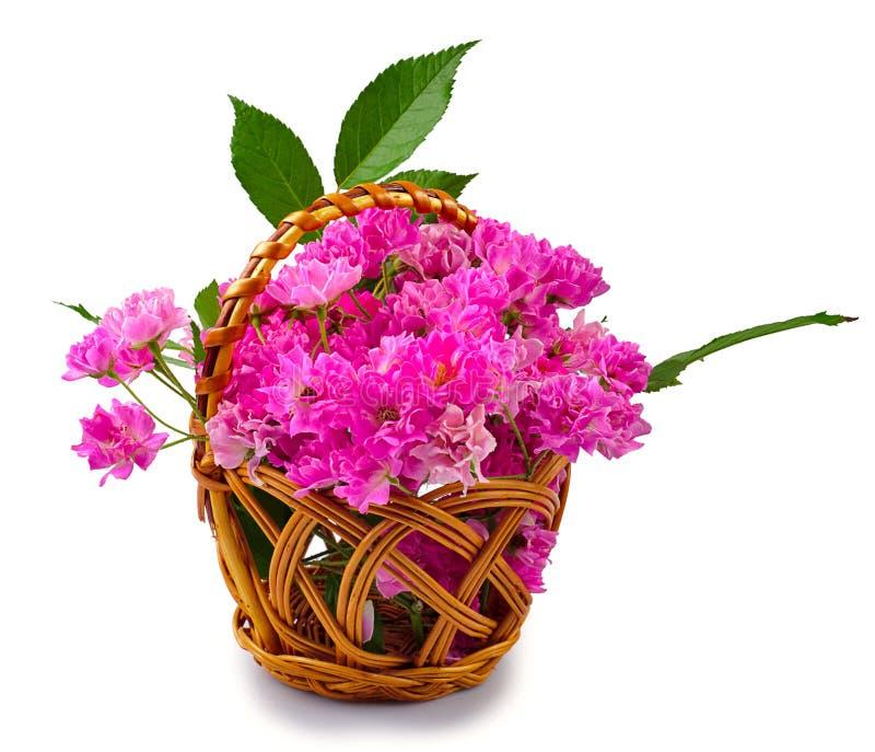 Roses roses dans le panier photos libres de droits