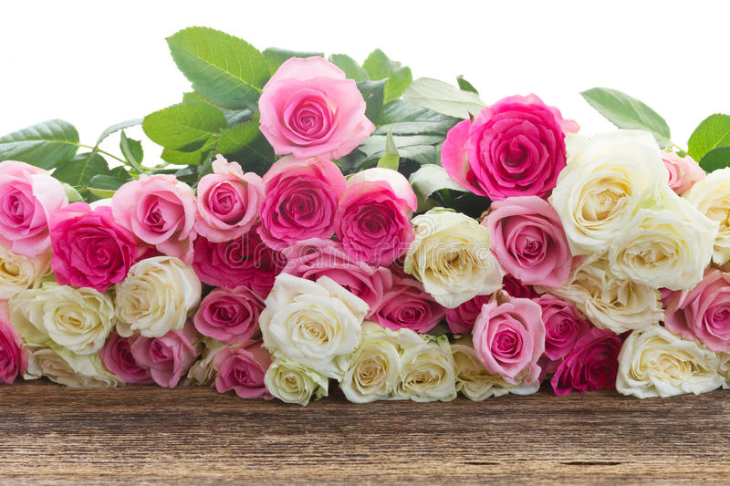 Roses roses et blanches image stock