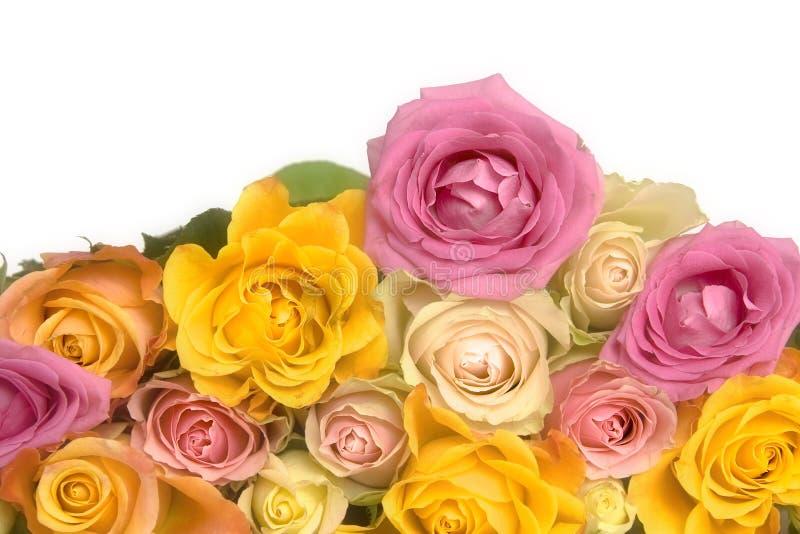 Roses roses et jaunes image stock