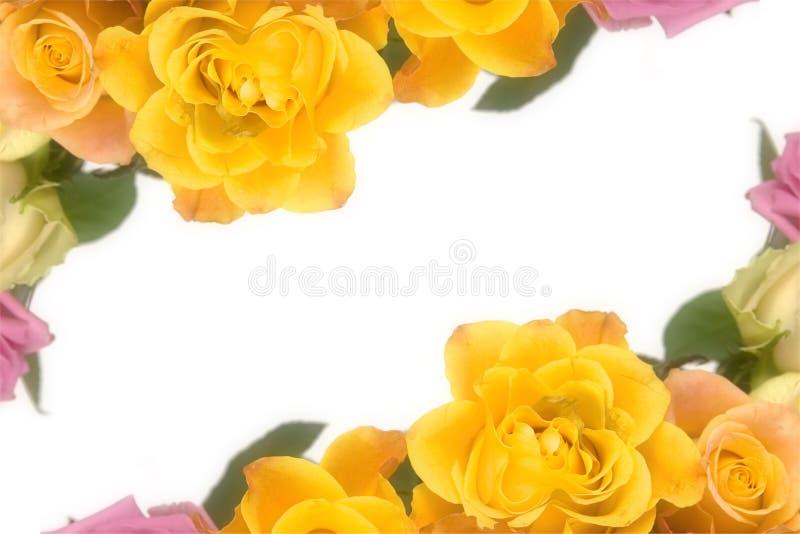 Roses roses et jaunes photo stock