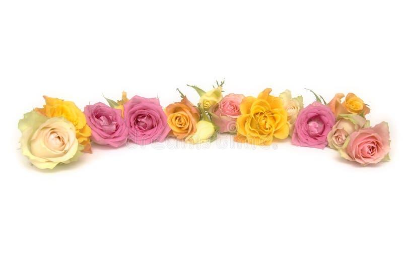 Roses roses et jaunes photographie stock libre de droits