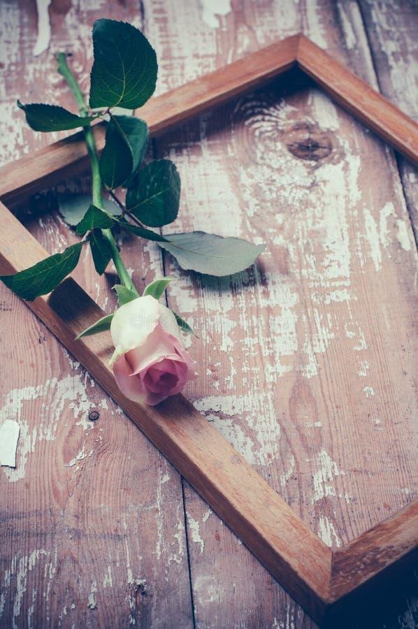 Roses roses et un cadre en bois photo libre de droits