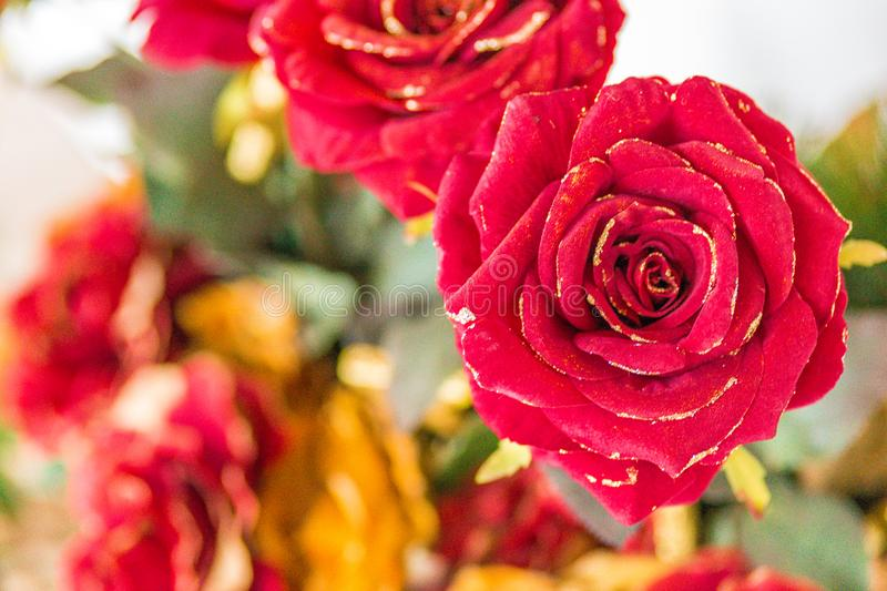 Roses rouges photo stock