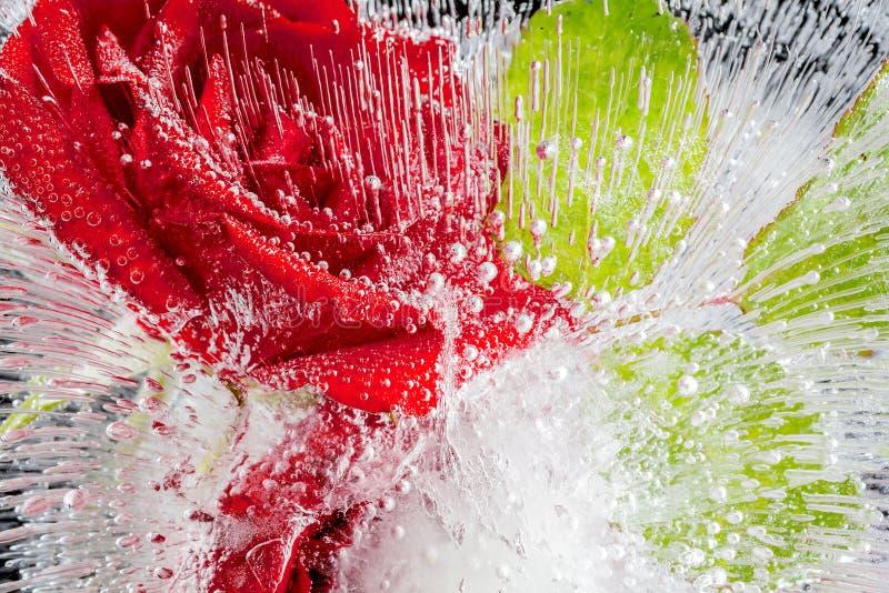 roses rouges congelées en glace sur un fond noir photographie stock