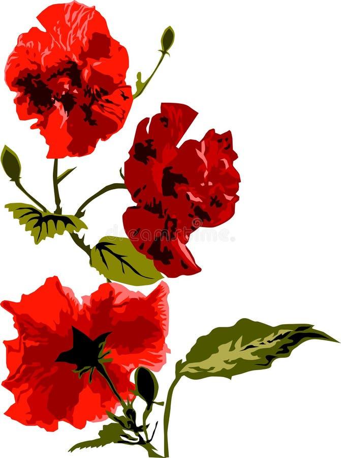 Roses rouges de floraison photos stock