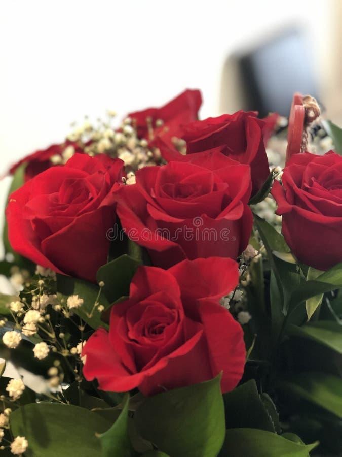 Roses rouges de jour de stupéfaction Valentine's images libres de droits