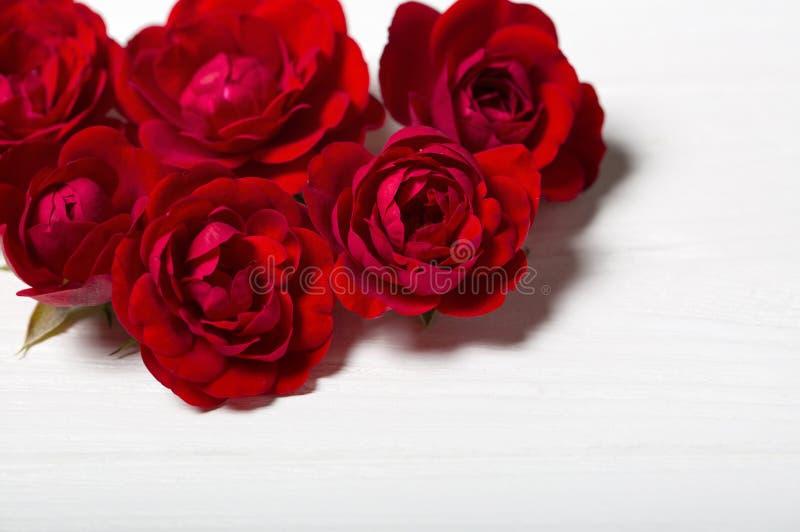 Roses rouges L'espace vide pour le texte photographie stock