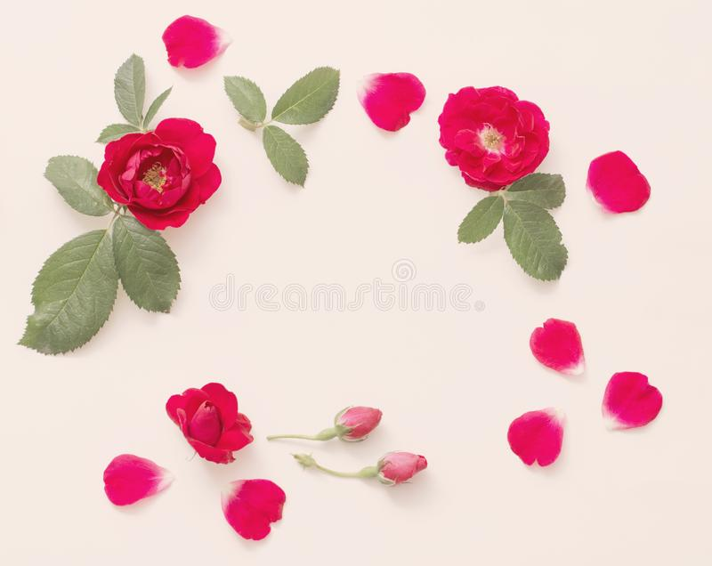 Roses rouges sur le fond blanc photographie stock