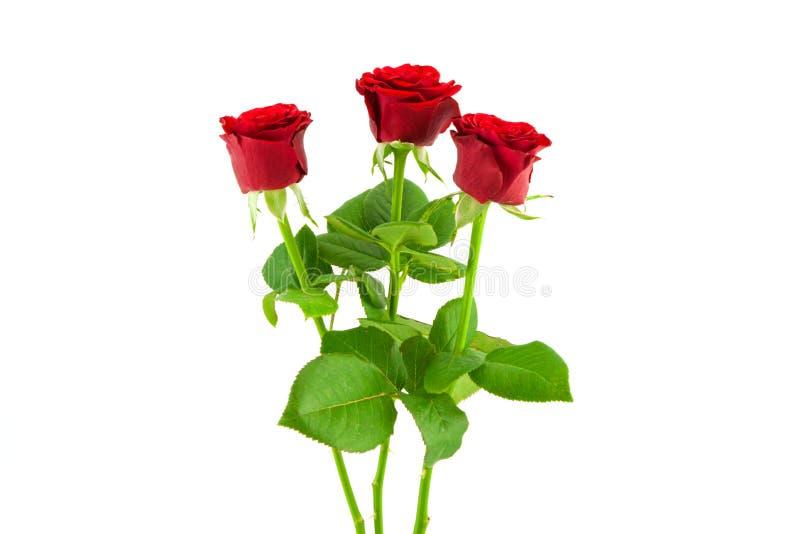 3 roses rouges sur un fond blanc image libre de droits
