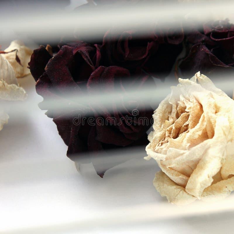 Roses sèches sur la fenêtre photographie stock libre de droits