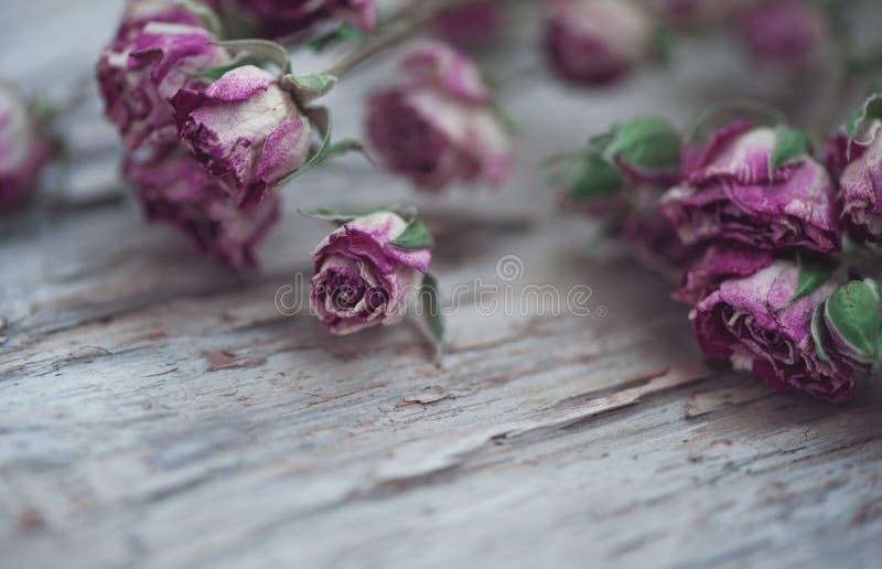 Roses sèches sur le vieux fond en bois photographie stock libre de droits