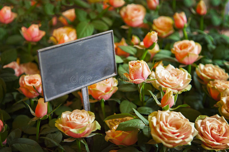 Roses for sale royalty free stock photo