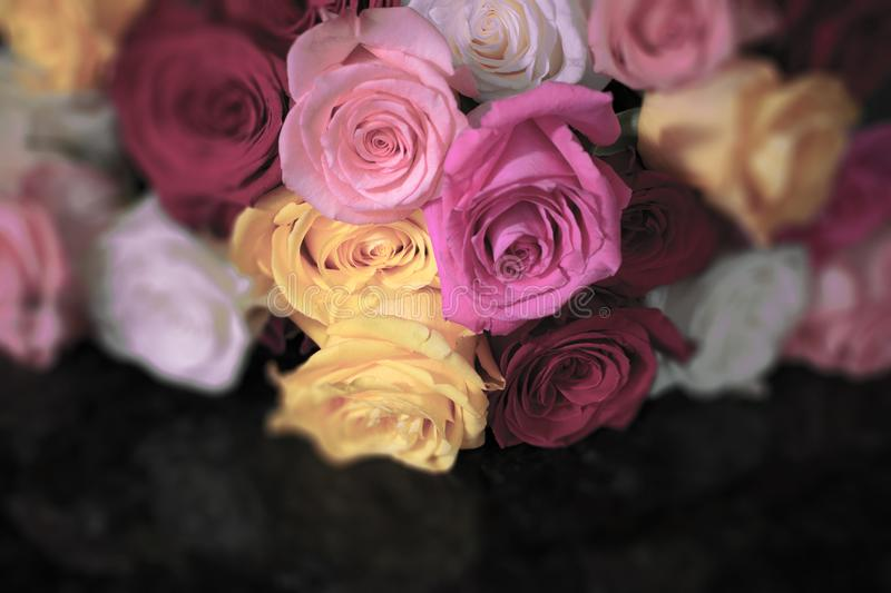 Roses in shades of pink on granite royalty free stock image
