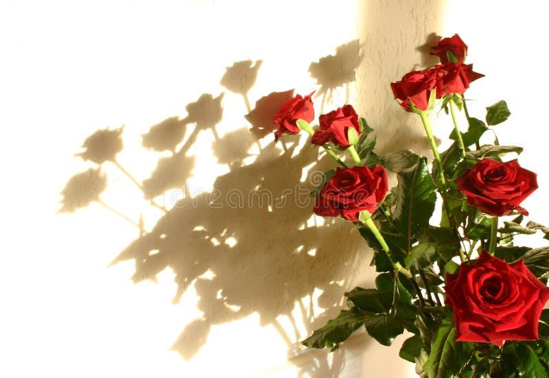 roses shadow 库存图片