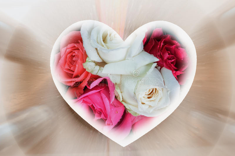 Roses in shape heart. On background royalty free stock photos