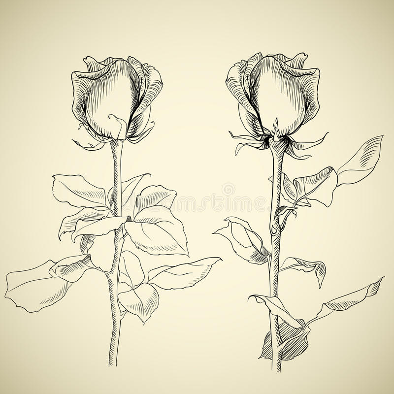 Download Roses, Sketch Royalty Free Stock Photos - Image: 18522628