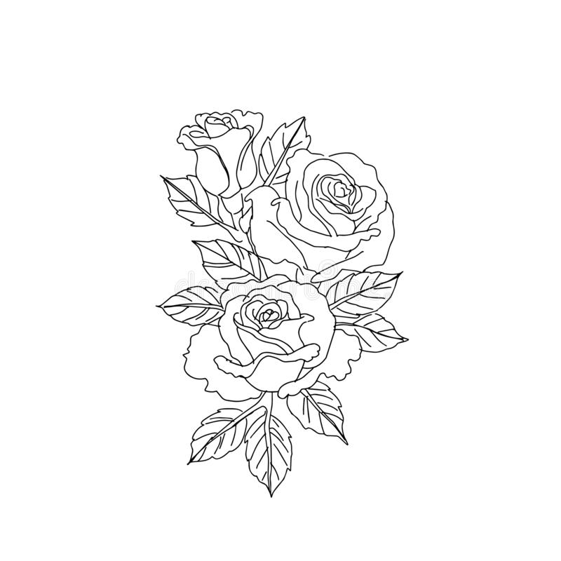 Roses sketches lines isolated on white background. vector illustration