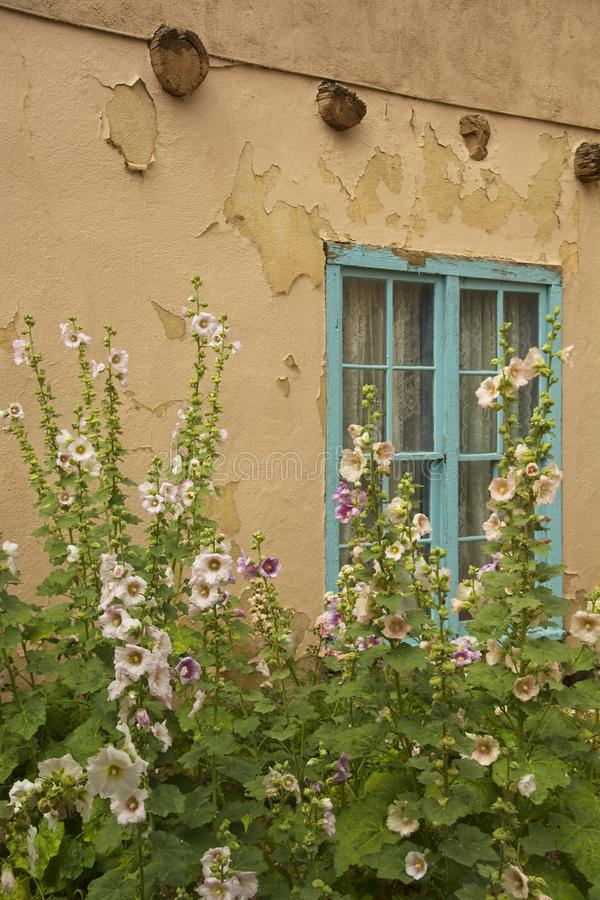 Roses trémière dans Taos, Nouveau Mexique image stock