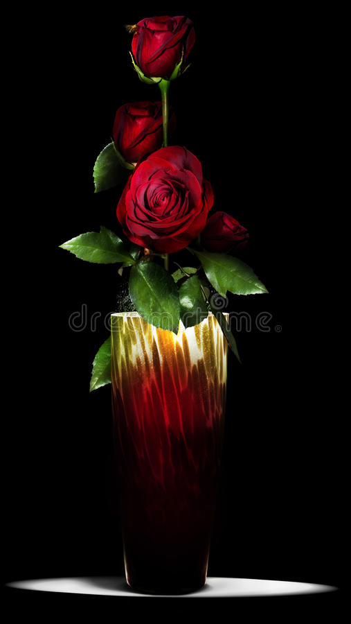 Roses in vase stock images