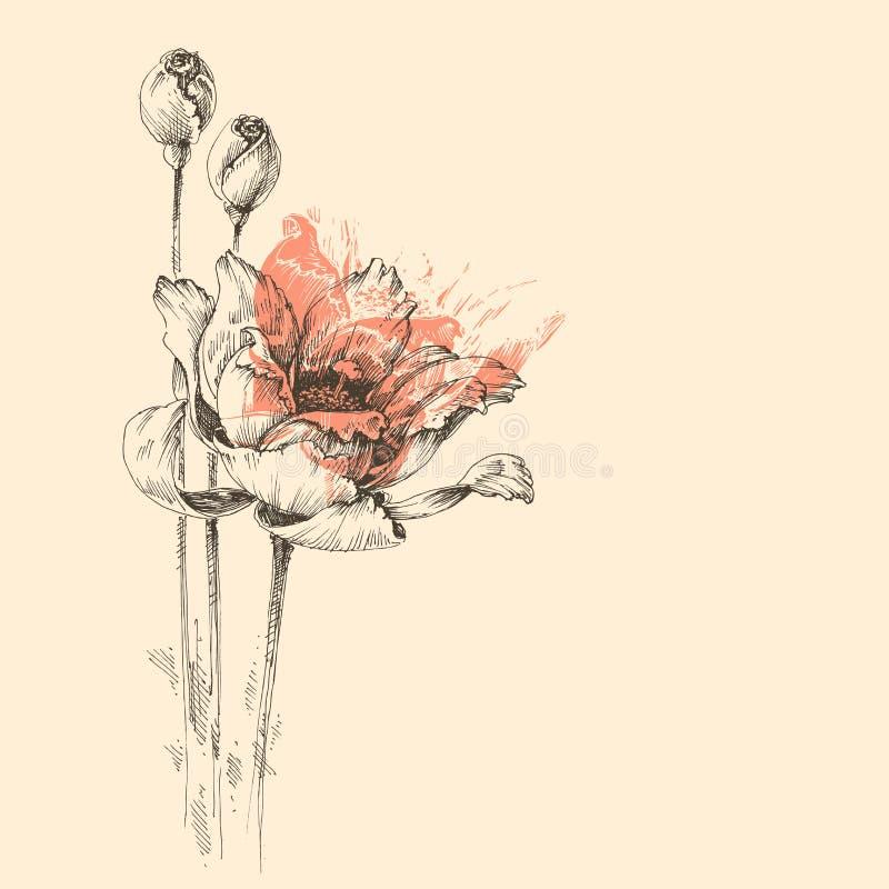 Roses vector sketch royalty free illustration