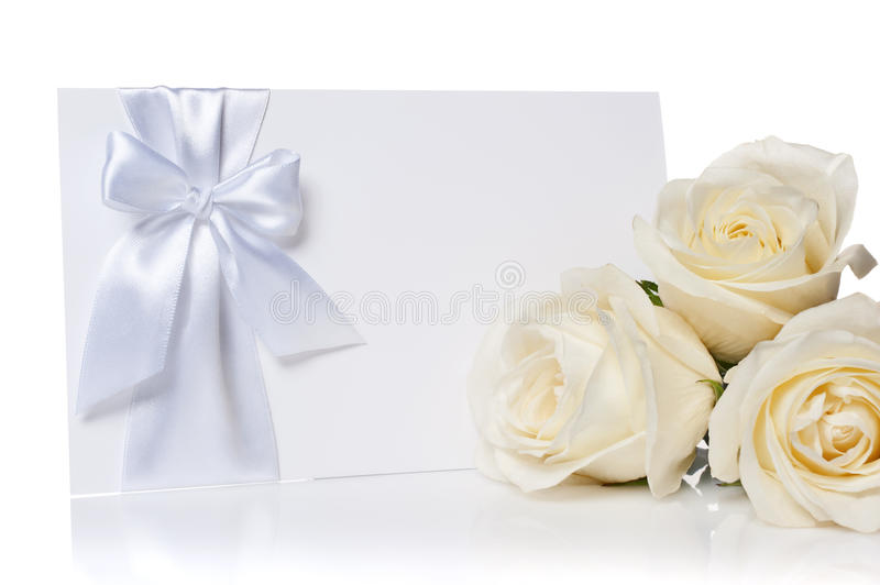 Roses on a white background royalty free stock photography