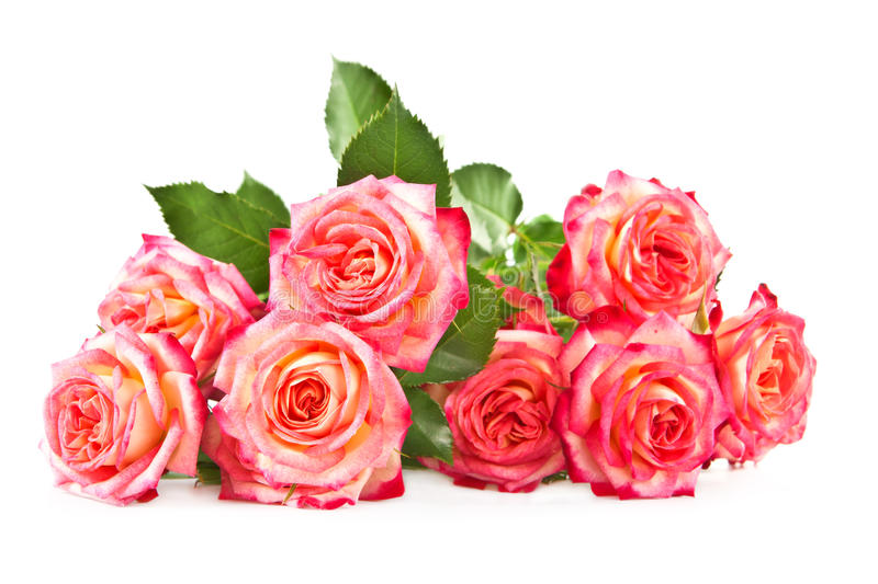 Download Roses On A White Background. Stock Photo - Image: 24948132