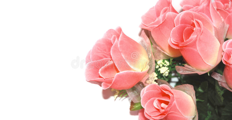 Download Roses on white background stock photo. Image of marriage - 3324894
