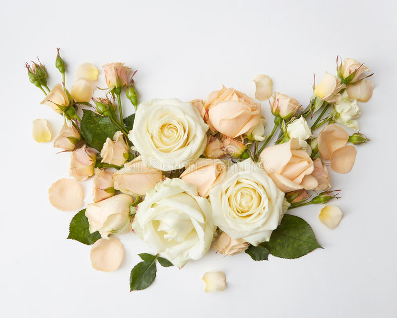 Roses on white background. Bouquet of roses represented over over white background. Beautiful decoration of flowers in Valentine`s Day or wedding of young stock photos