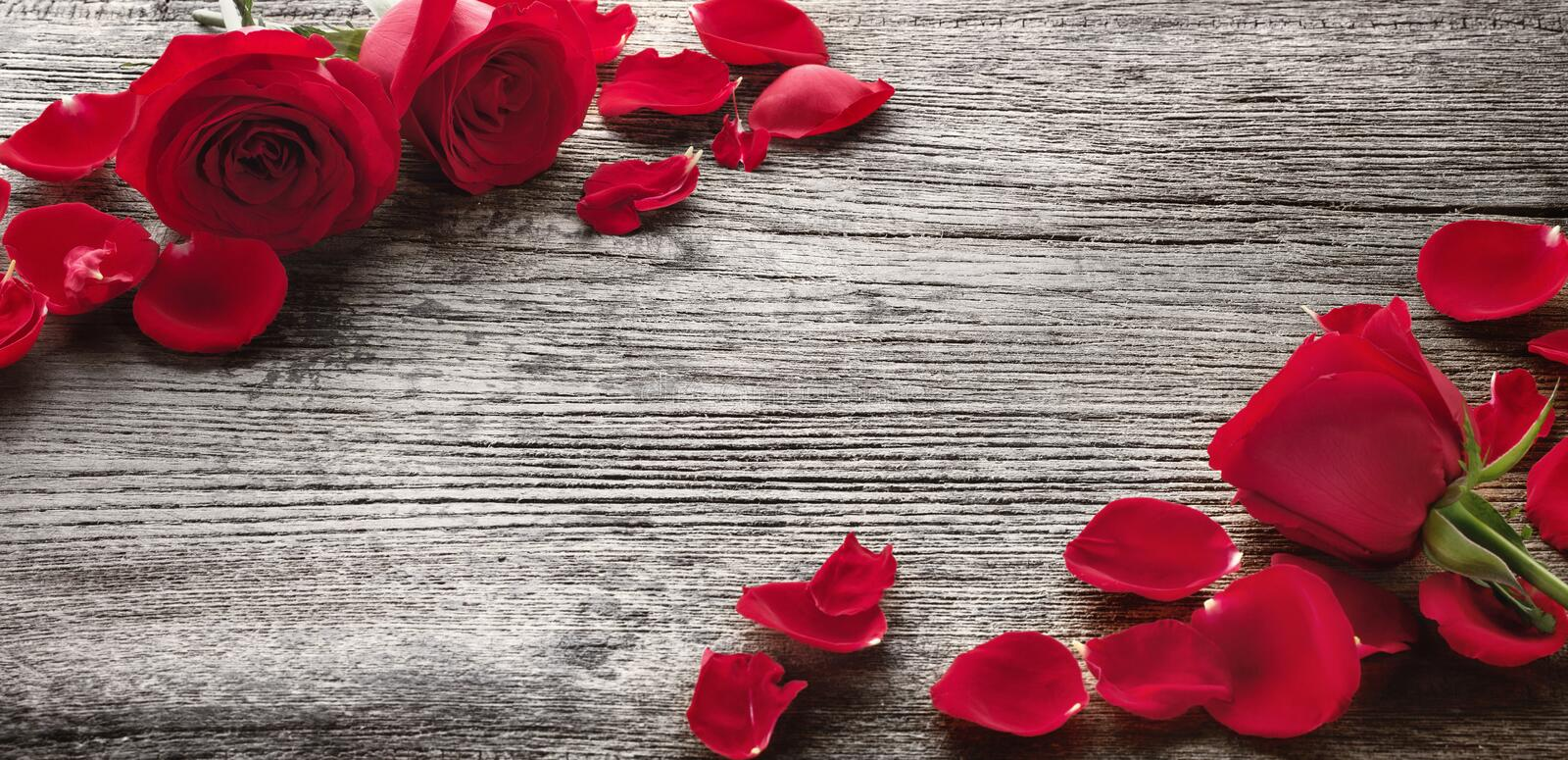 Roses on wooden board stock image