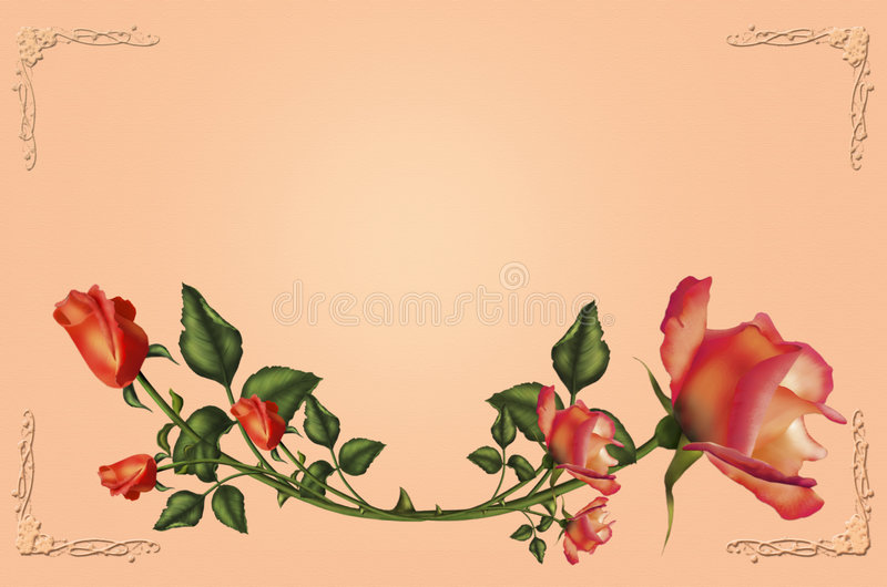 Roses for you royalty free stock photography