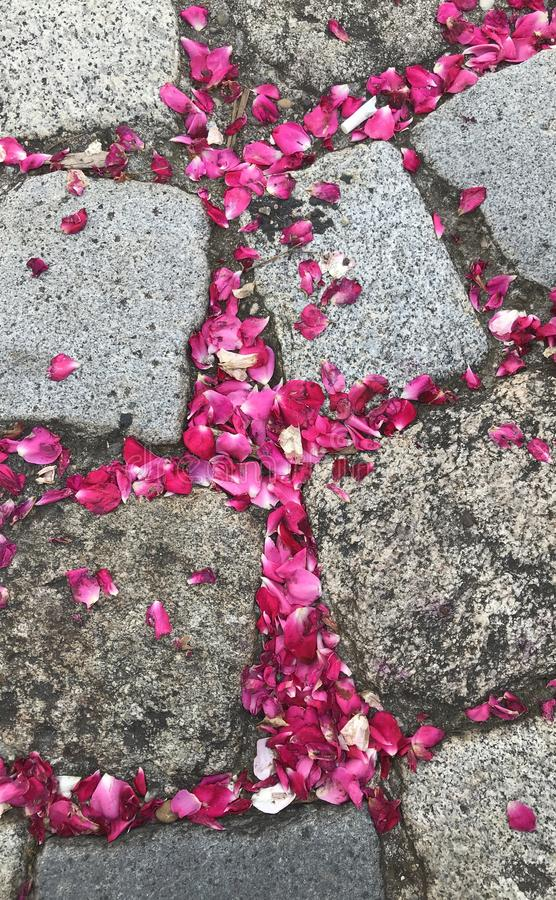 Roses and stones royalty free stock photo