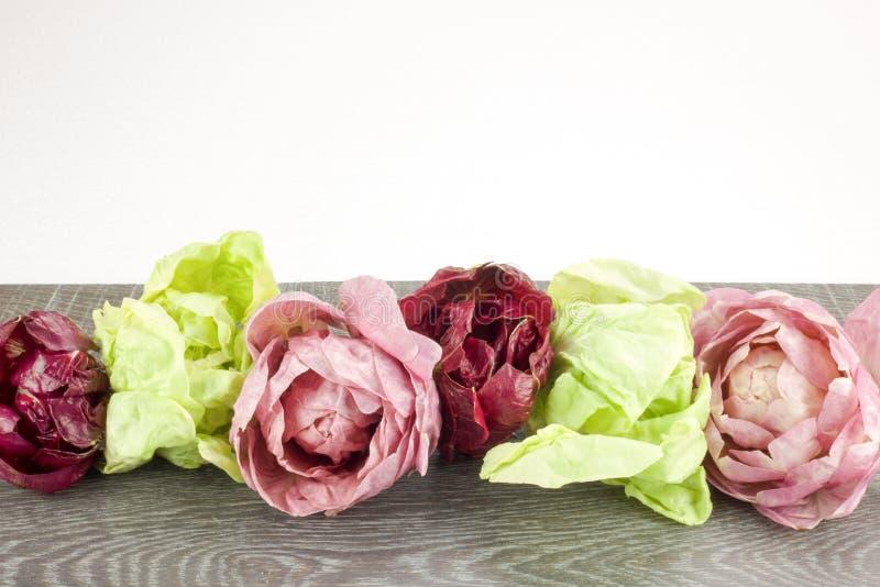 Rosetones de la achicoria en diverso color en una tabla y un blanco de madera fotos de archivo
