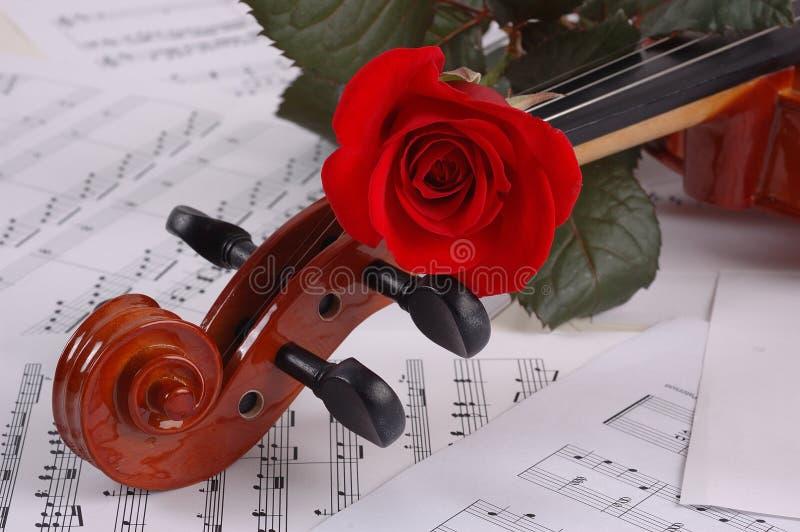 Roseviolin stock photos