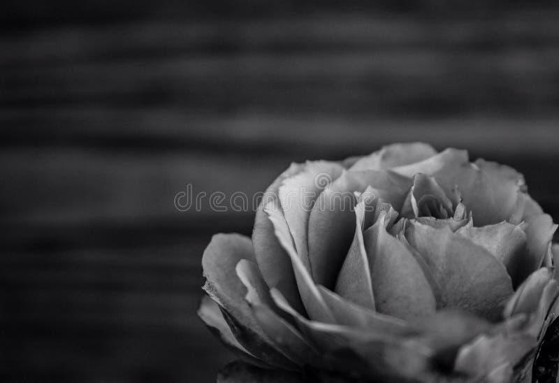 rosewood zdjęcie royalty free