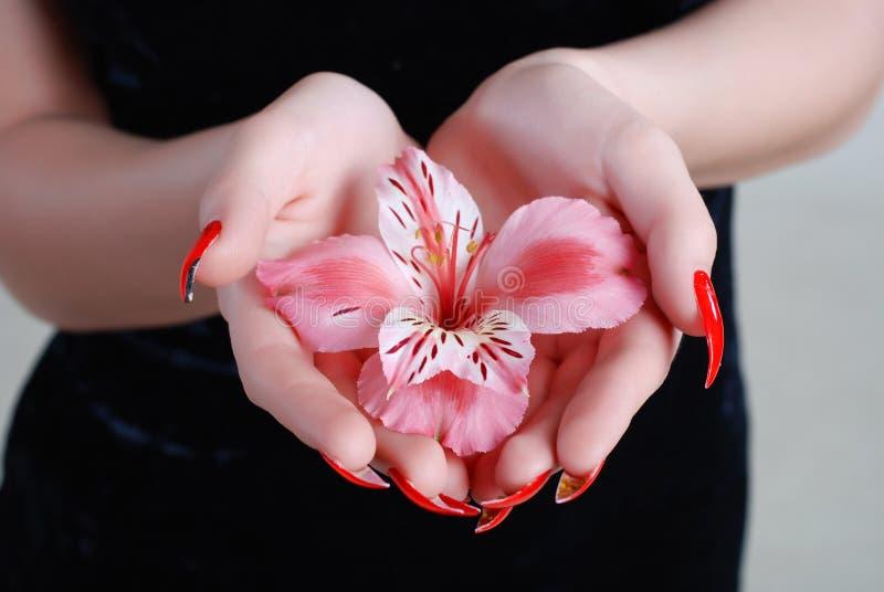 Rosige Orchidee lizenzfreies stockfoto