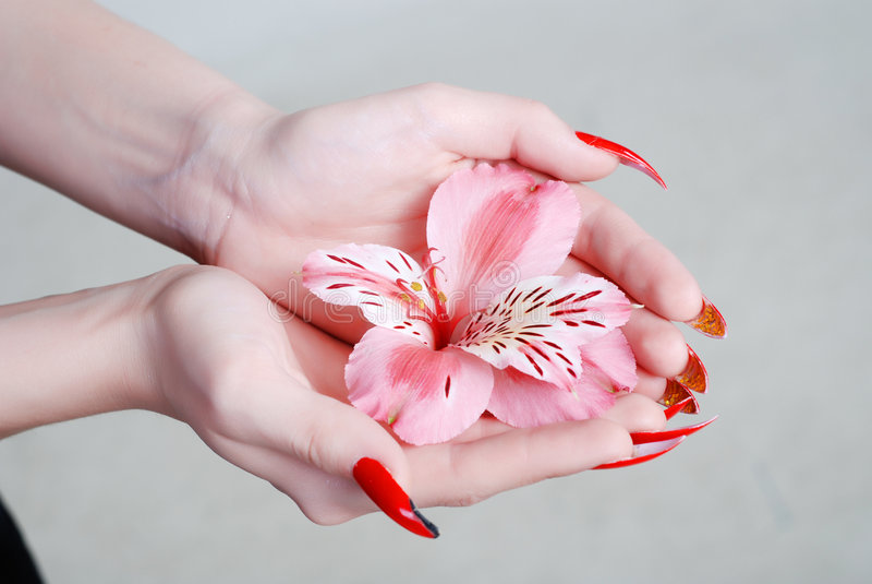 Rosige Orchidee stockfotografie