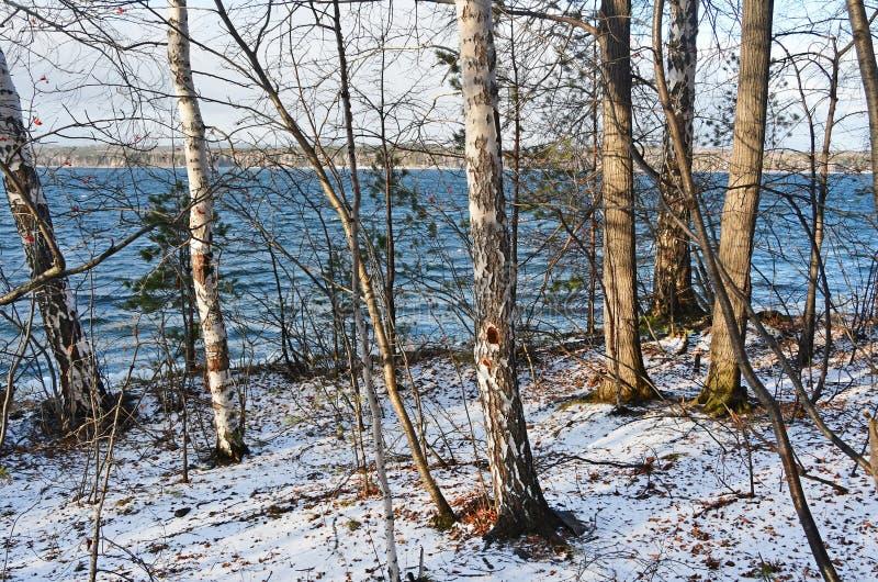 Rosja, Chelyabinsk region Brzozy i osiki wzdłuż banków jeziorny Uvildy na Vyazovyy wyspie w jasnej pogodzie w jesieni fotografia royalty free