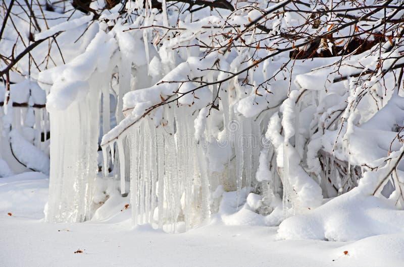 Rosja, Chelyabinsk region Sople na drzewach na brzeg jeziorny Uvildy w zimie obraz stock