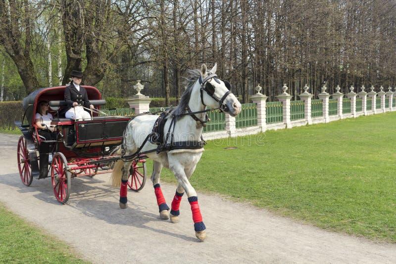 ROSJA MOSKWA -24 2019 Kwiecień stangret w pelerynie siedzi w trenerze z koniem i chwyt ogranicza w wiosna parku zdjęcie stock