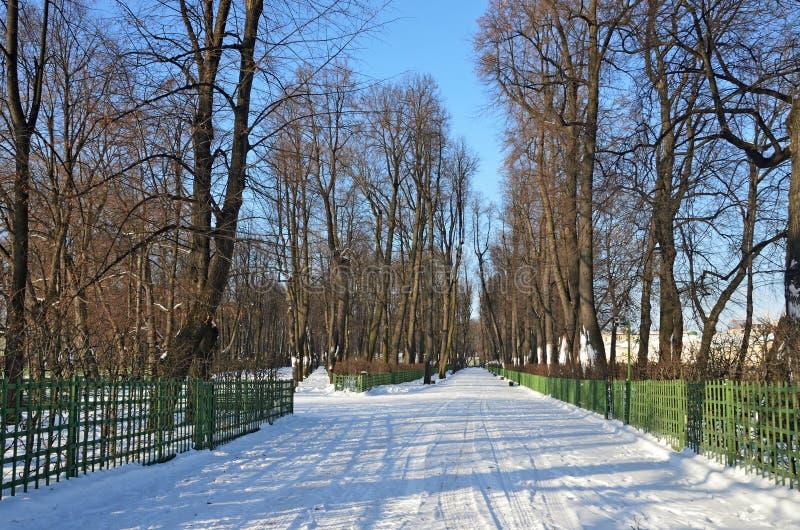 Rosja, St Petersburg, lato ogród w zimie zdjęcie stock