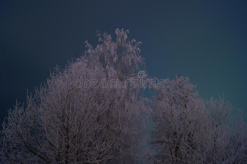Rosja zimy Rosyjski lasowy las obraz royalty free