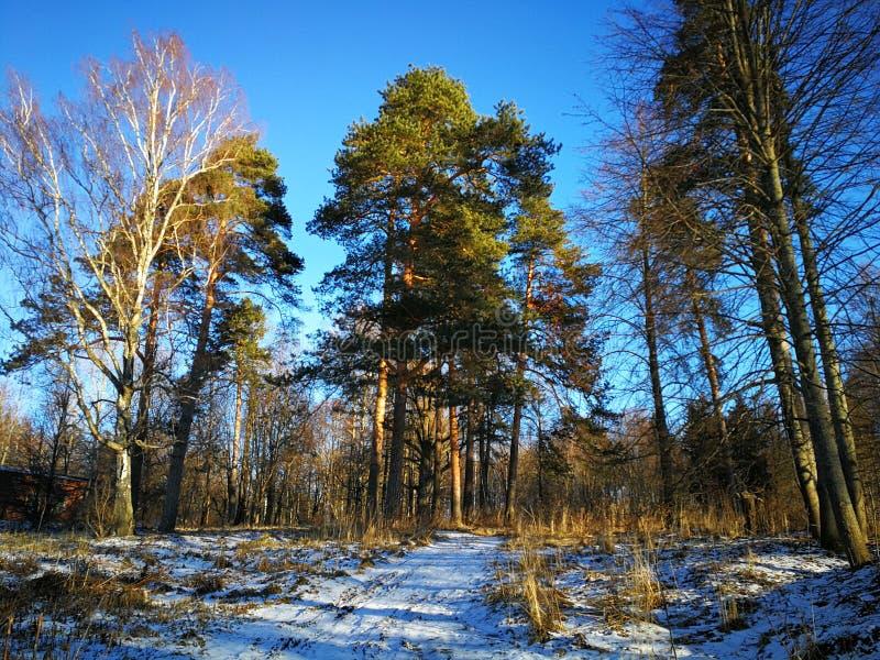 rosji zima zdjęcia stock